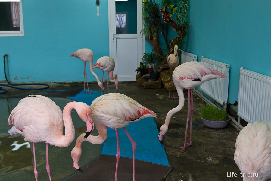 Фламинго занятно смотрятся на фоне батарей отопления