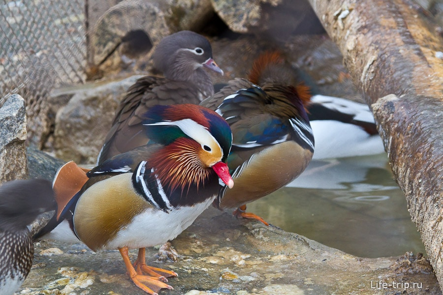 Очень эта птица понравилась