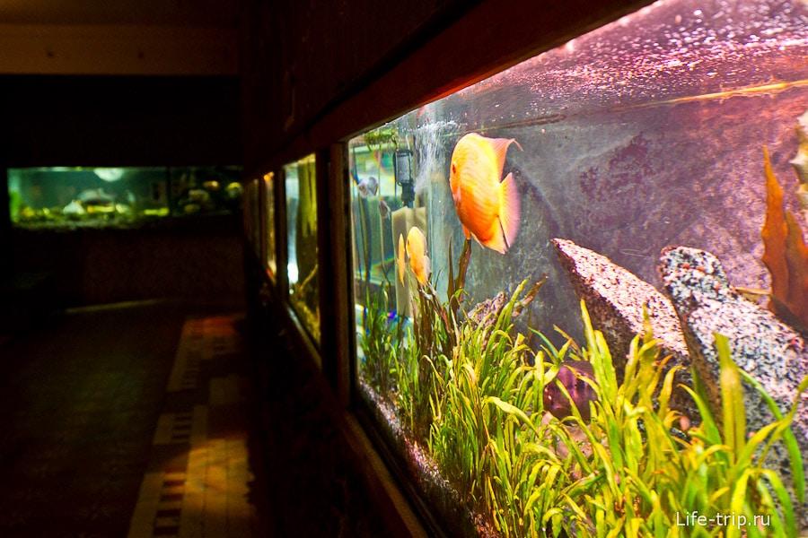 Павильон с аквариумами