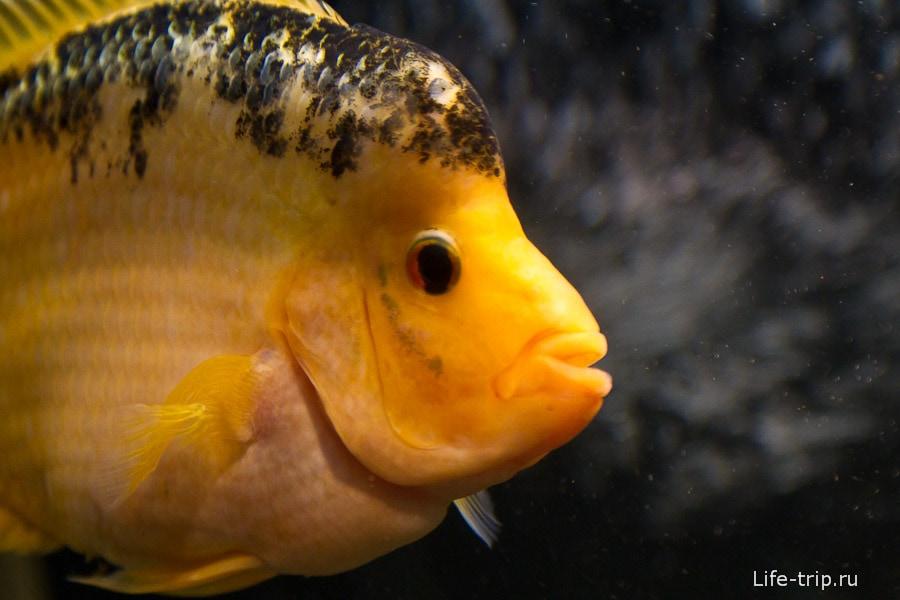 Красочная рыбка