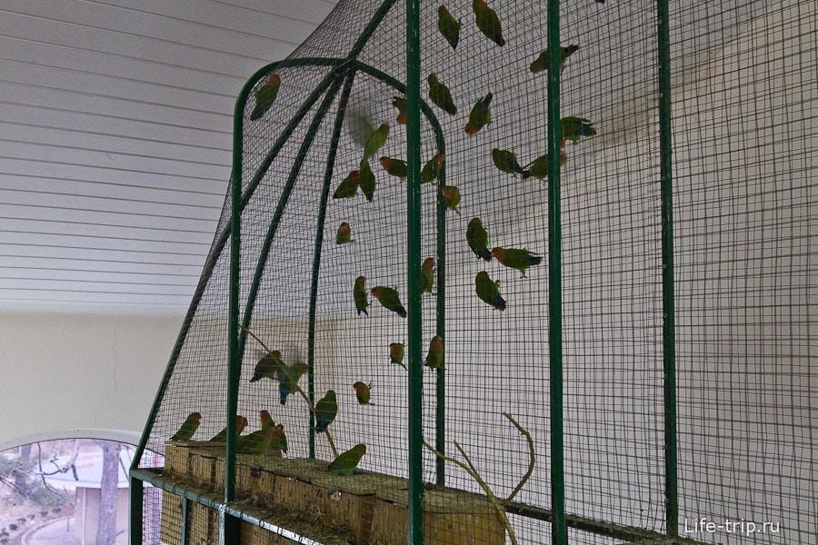 Попугаи в трехметровой клетке истерично верещат