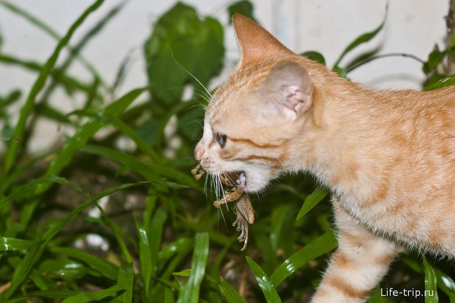 Наш кот ест лягушку - француз!