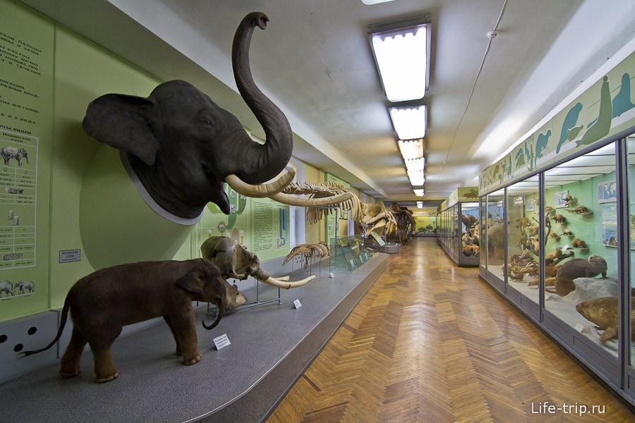 Голова слона была отдана несколько лет назад соседним зоопарком