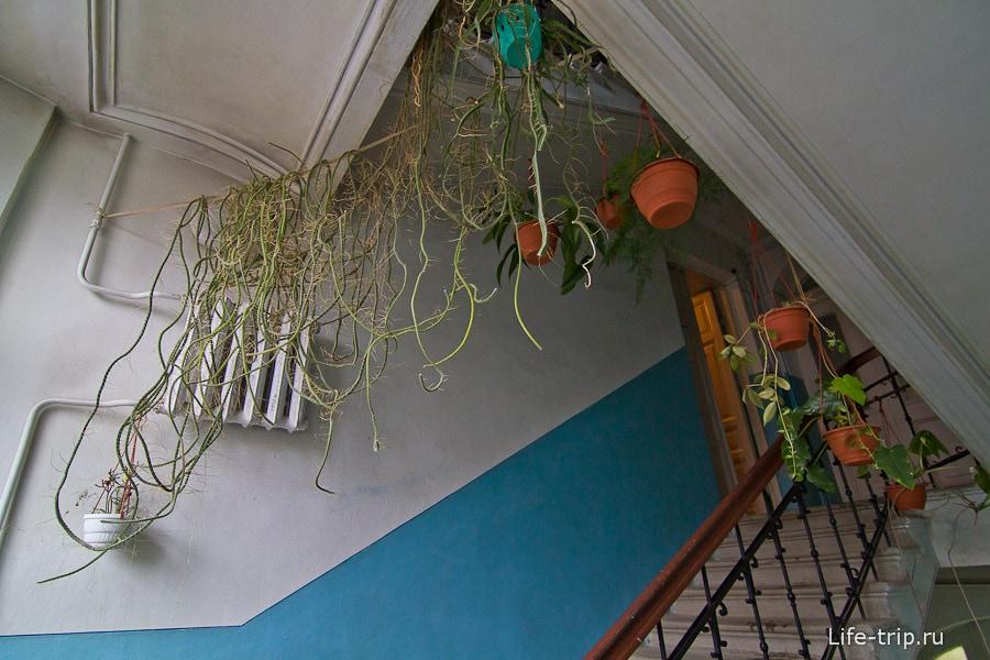 Лестничную клетку опутывают лианы