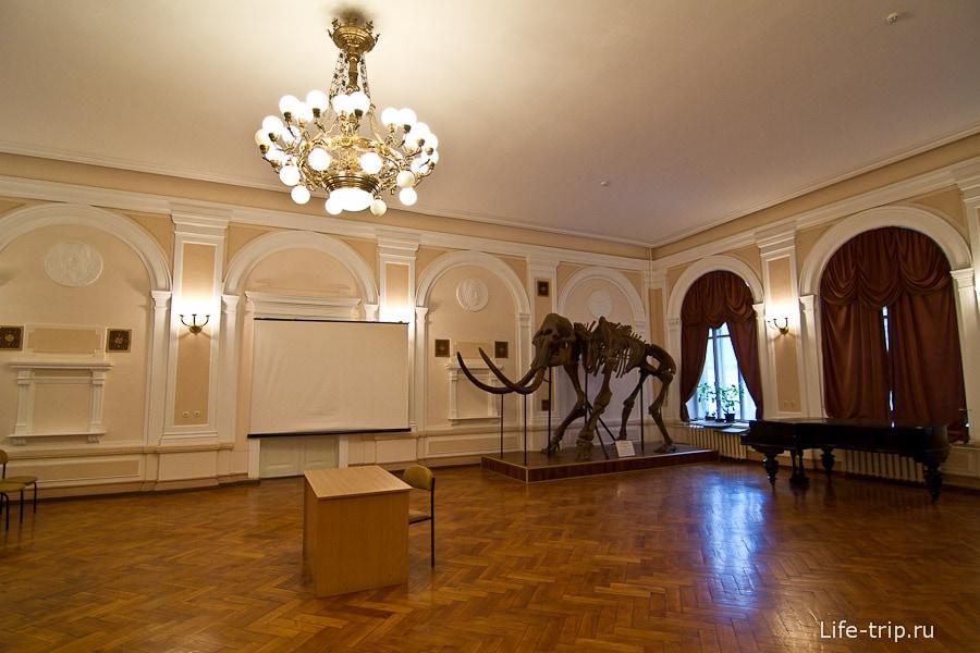 Общий зал для вечеров с мамонтом в углу