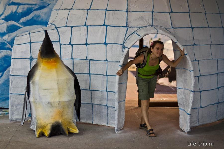 Ледяные жилища пингвинов готовы