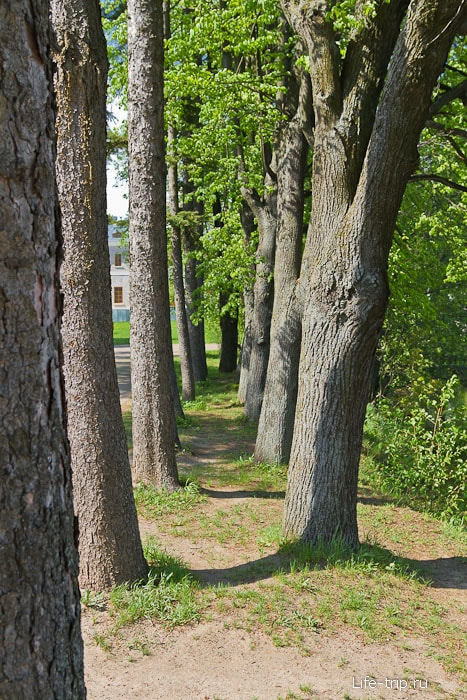 Забавно деревья посадили