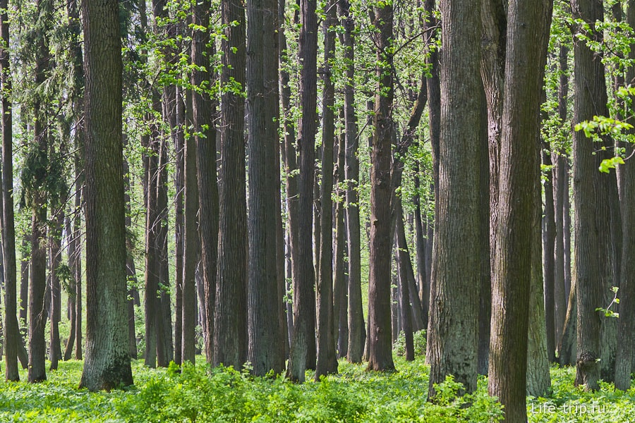 Прямо таки частокол лесной