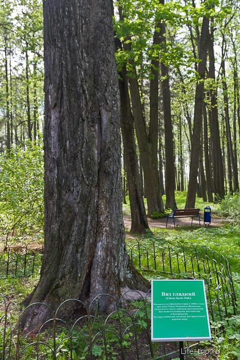 Значимые деревья подписаны