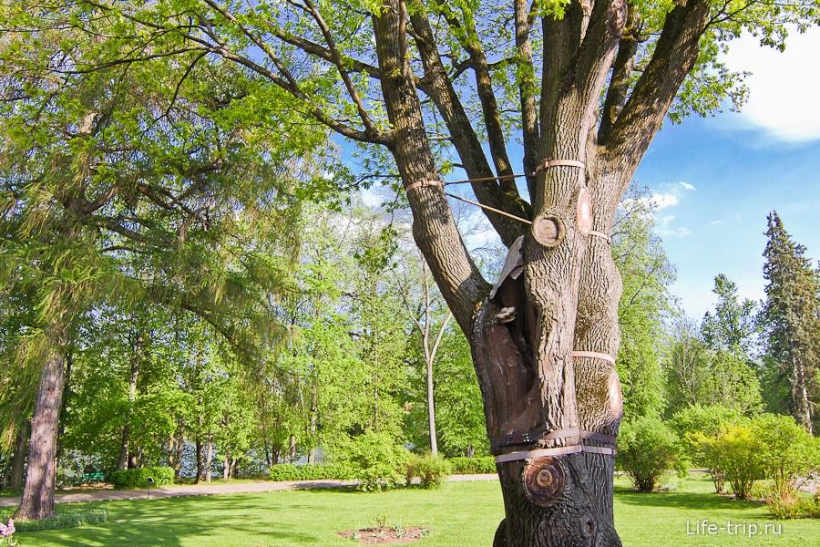 Деревья спасают металлическими стяжками