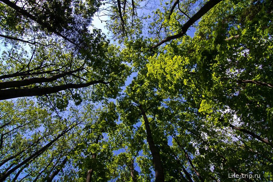 Деревья цепляют облака