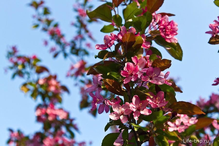 Очень красивое цветущее дерево