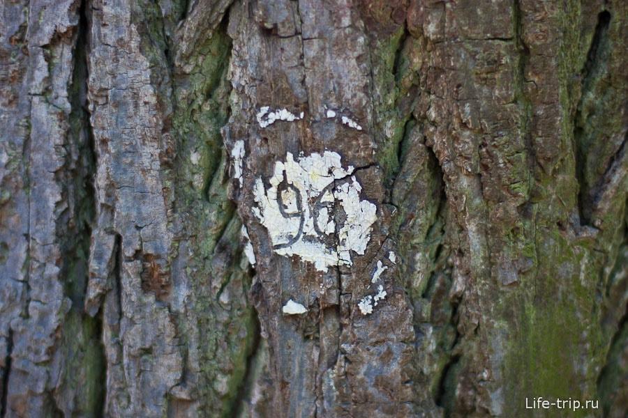 Некоторые деревья пронумерованы