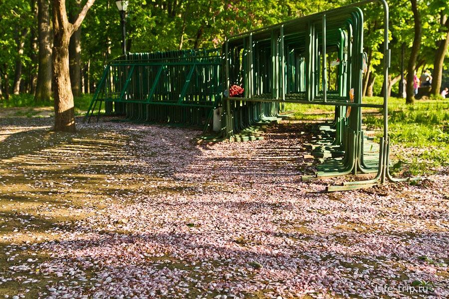Лепестки образовали цветочную поляну