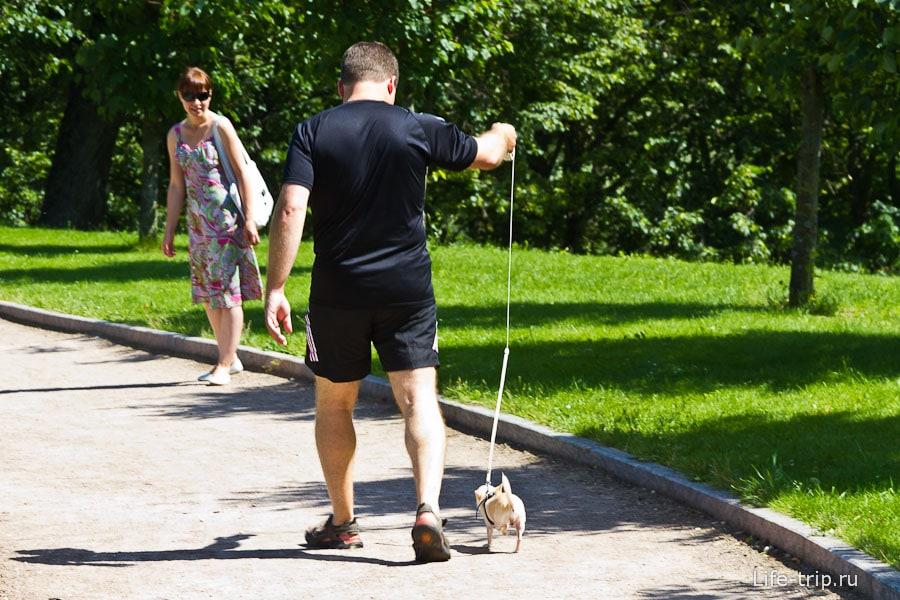 Брутальный мужчина выгуливает собаку-хомяка