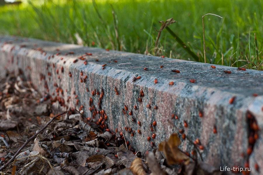 Период бурного роста какой-то популяции жуков