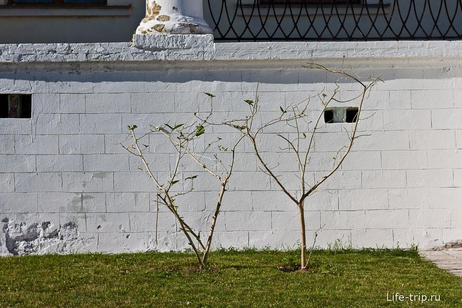 Странные обглоданные деревья
