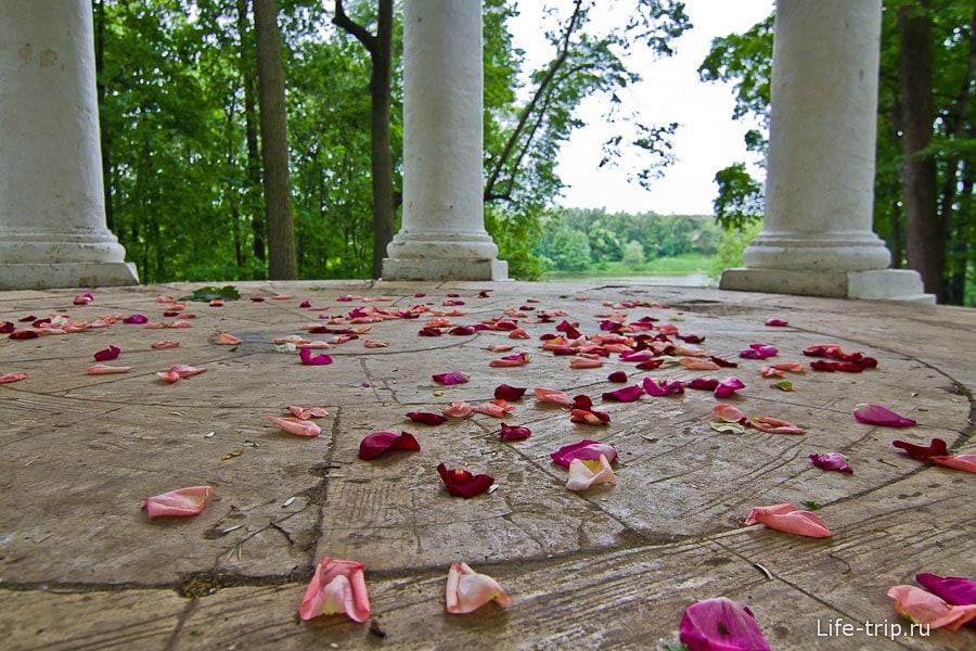 Лепестки роз в беседке после свадьбы