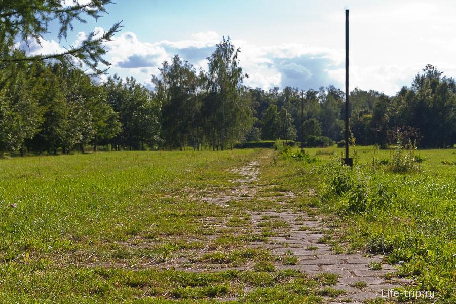 Сквозь плиты дорожки растет трава
