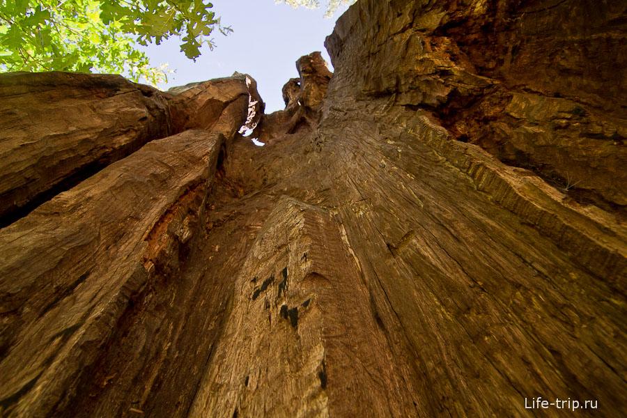 Многолетнее дерево, или точнее остатки ствола