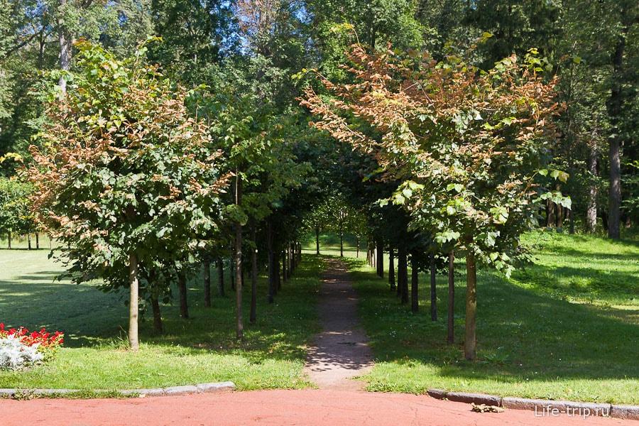 Мини-аллея из маленьких деревьев