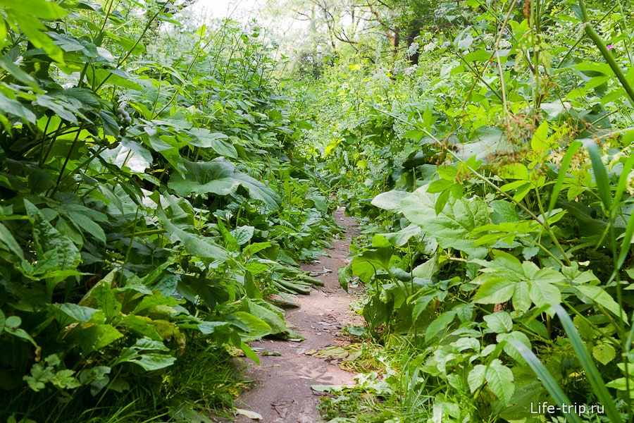 Тропинка сквозь джунгли