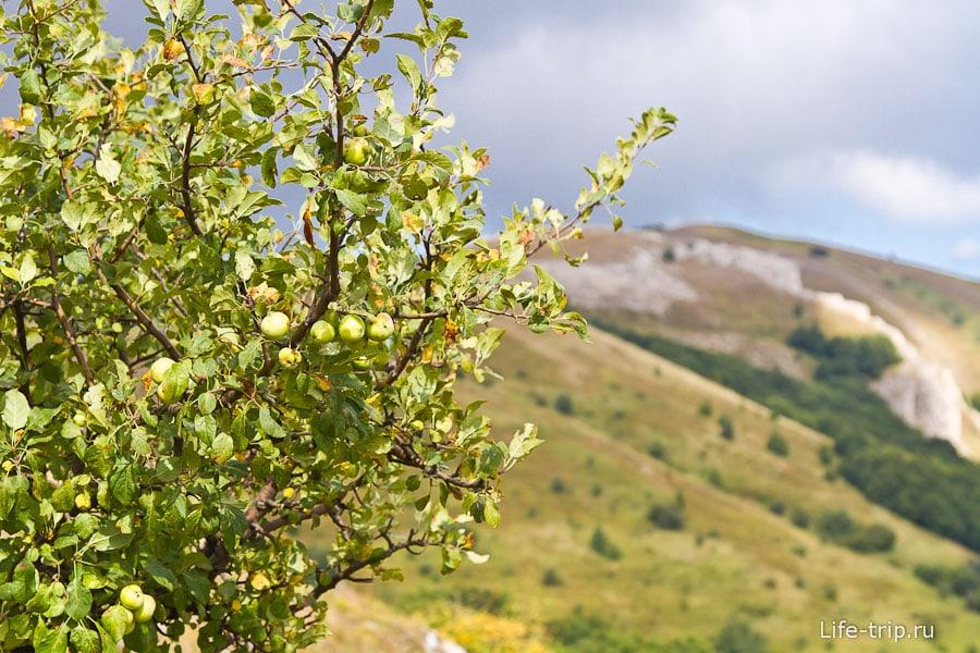 Повсюду растут яблоки