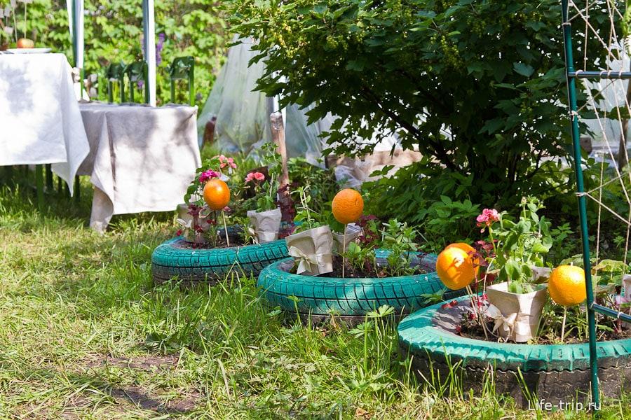 Апельсиновые клумбы