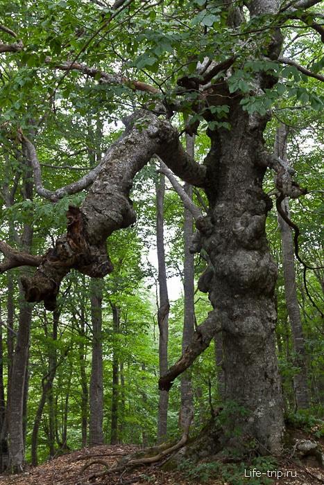 Деревья попадаются невероятные
