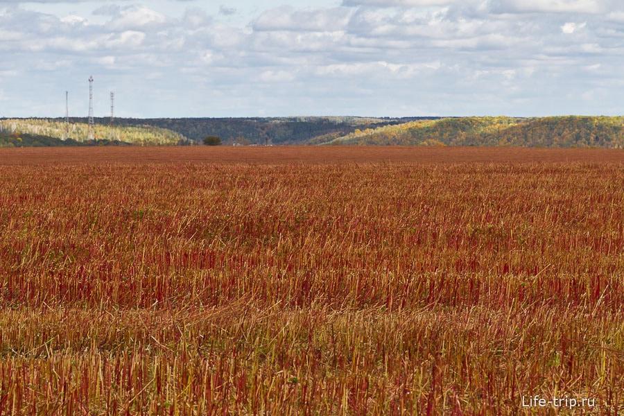 Обычное скошенное красное поле