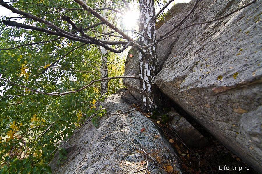Тянутся к небу не взирая на камни