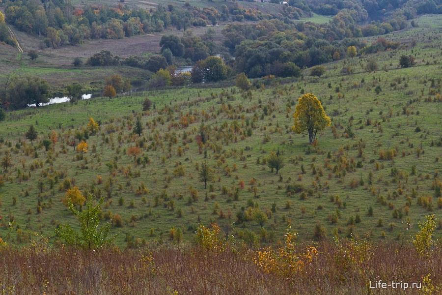 Забавное поле-склон все в маленьких деревьях