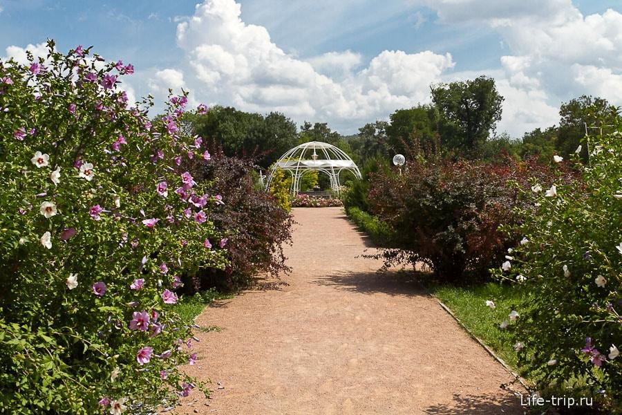Розарий в парке Салгирка