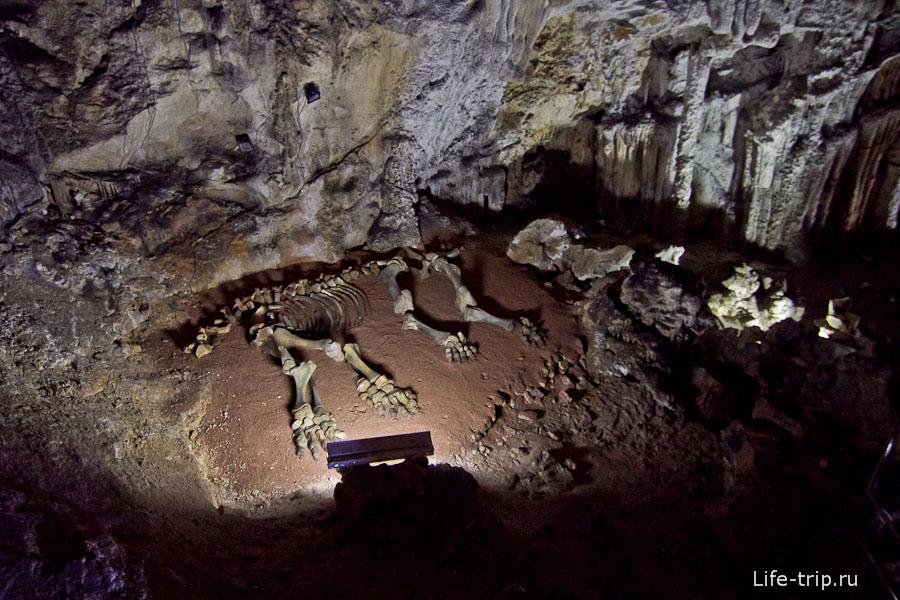 Скелет мамонтенка