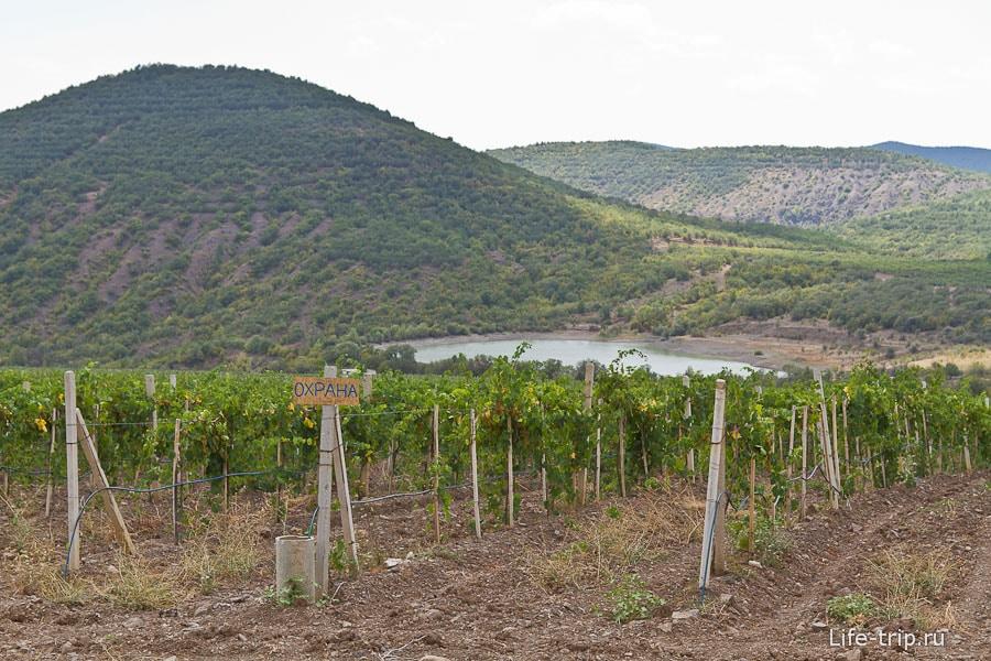 Километровые виноградные плантации до самого Рыбачьего