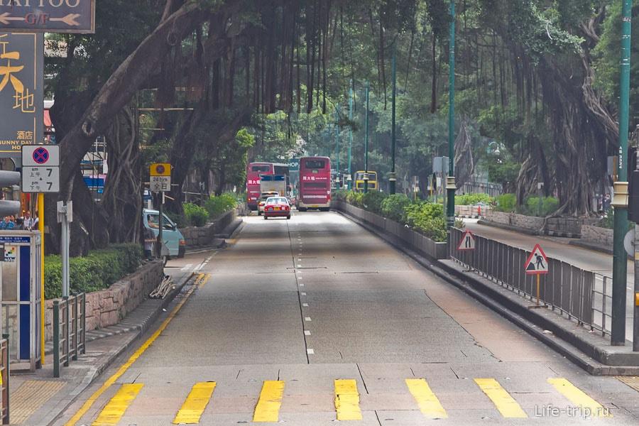 Большие деревья нависают над Nathan Road