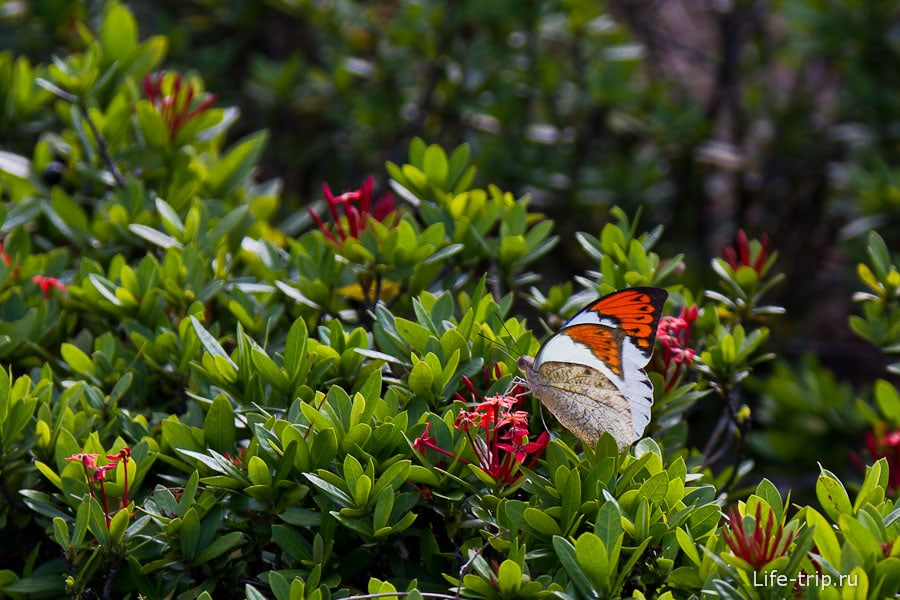 Вместо мух в городе летают бабочки