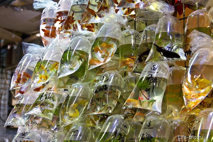 Fish Market - покупай идеальное домашнее животное для стесненных условий