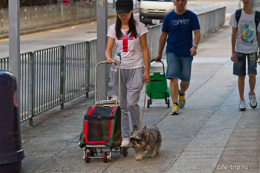 Выгуливает собаку и тележку для собаки