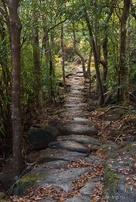 Сквозь джунгли