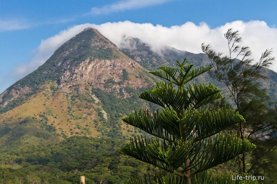Вокруг горы и такие вот красивые деревья