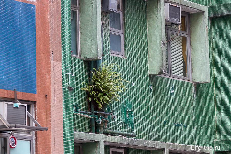 Букет растет прямо под окном