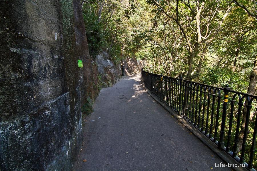 Morning trail вокруг пика Виктории, людей тут на самом деле много