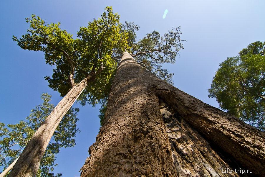 Деревья высоченные