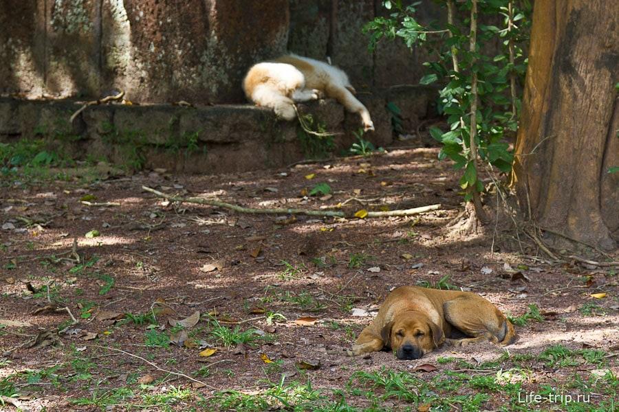 Собаки знай себе дрыхнут, жара ведь