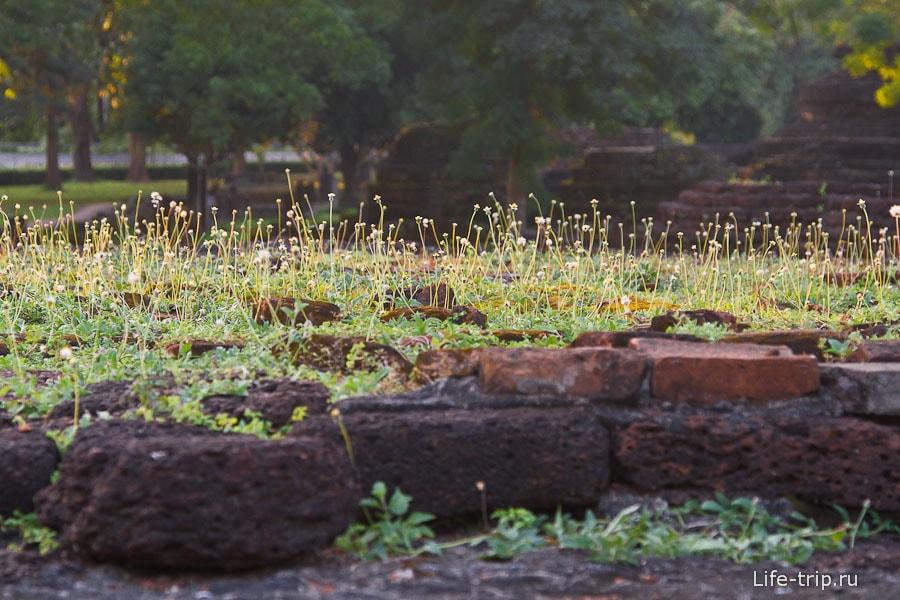 На стене уже целый газон вырос