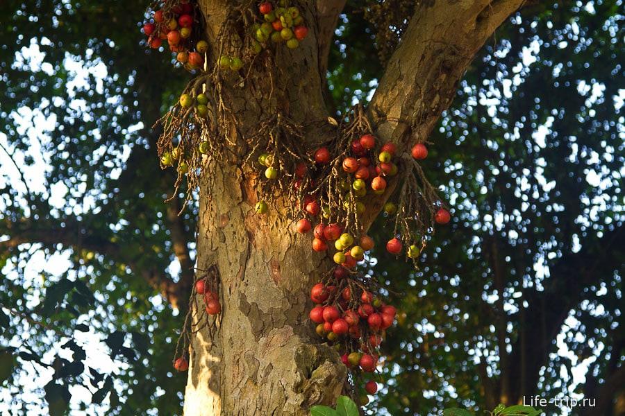 Что-то уже созрело на дереве