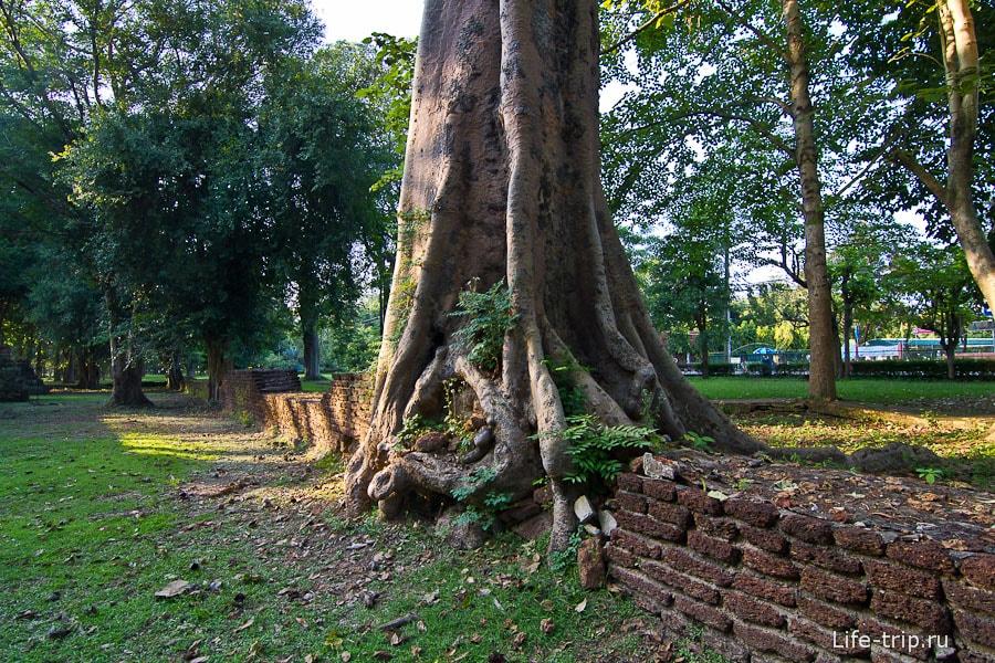 Деревья за столько лет отвоевали себе место под солнцем