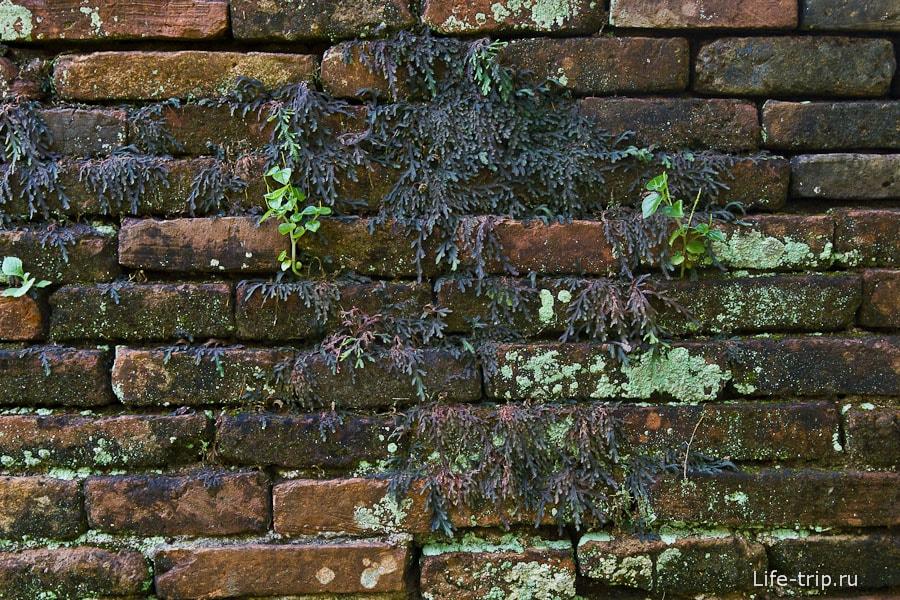 Кирпич уже весь в растениях и мхе