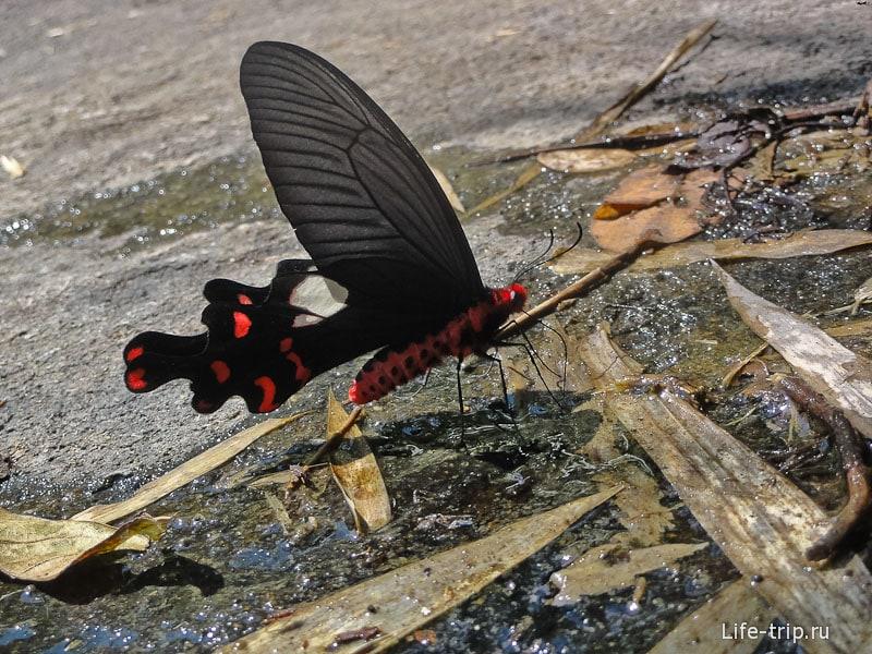 Всякого рода бабочки встречаются повсеместно